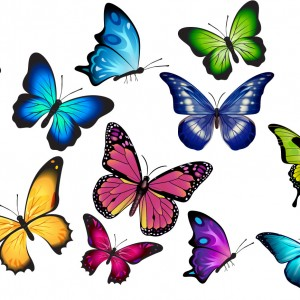 my butterflies
